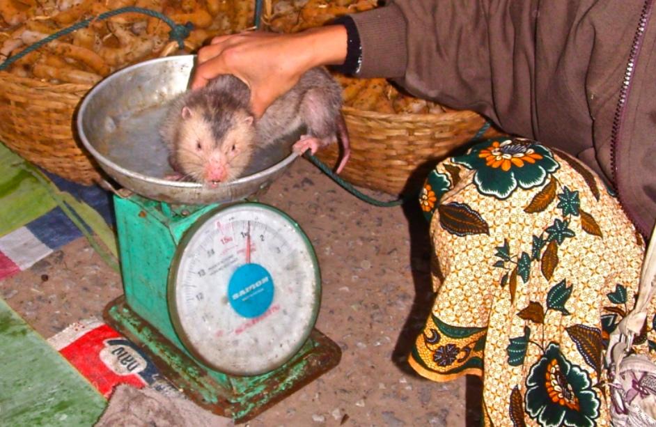 Rat Sell