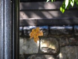 Leaf in a Web