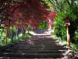 Mt. Arakura Sengen Steps