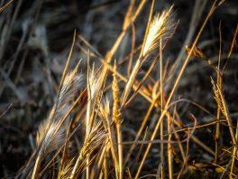 Sunset Straw