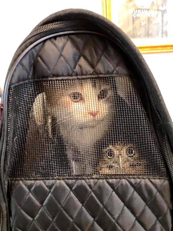 Adorable Kitten And Owlet Become Best Friends