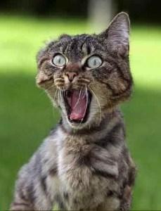Klarinett-skødd utført av katt