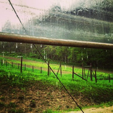 """""""Waiting for the rain to go"""" with instagram to spice it up!  That's our half plowed field in the background."""