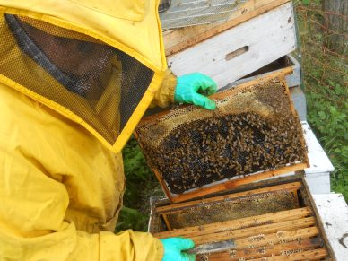 Opening the hive