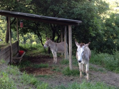 A new roof for the donkeys