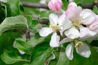 Пчелы, просто шалеют :)