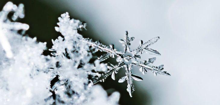 Schneeflocke klein Makro