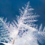Frost an Zweigspitze