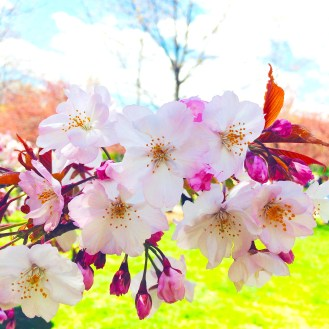 Tuesday (8am): Take a stroll through the Brooklyn Botanic Garden. It's free all day today!