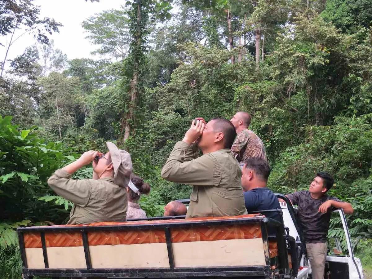 Deramakot Forest wildlife watching