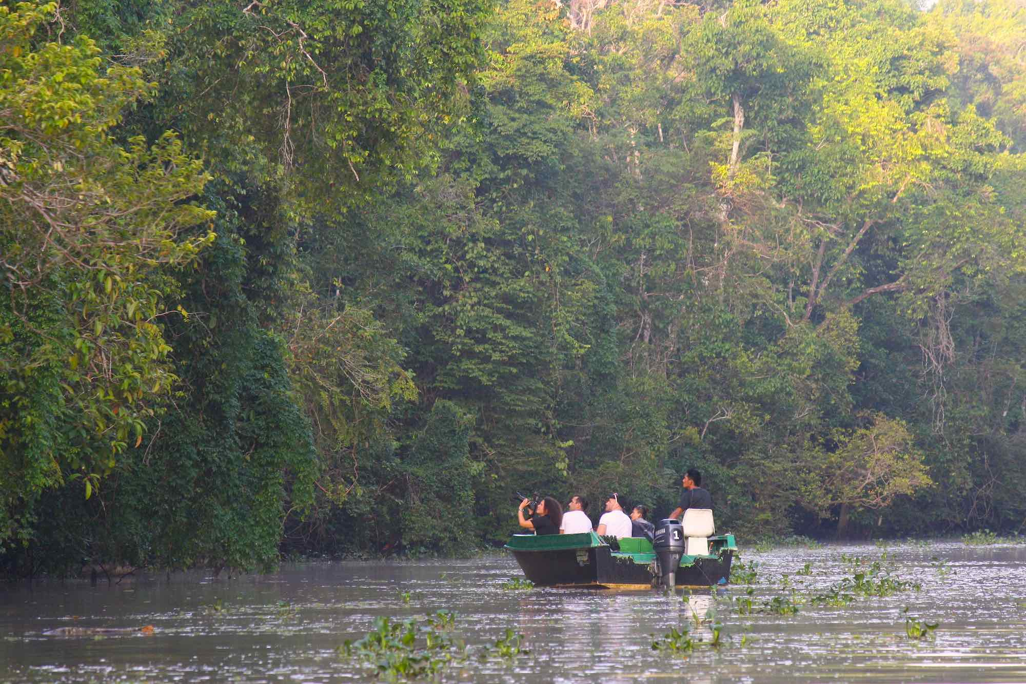 Watching orangutans on the Menanggul River, Kinabatangan