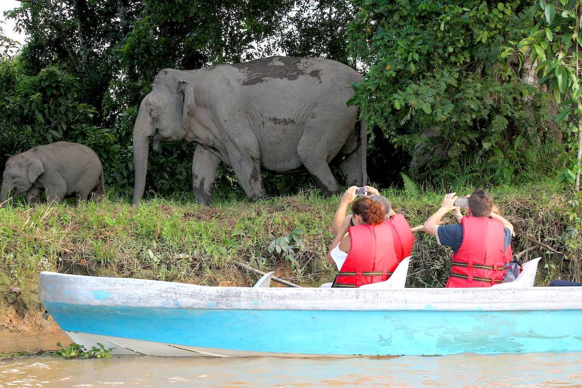 tourists watching pygmy elephants, Sabah