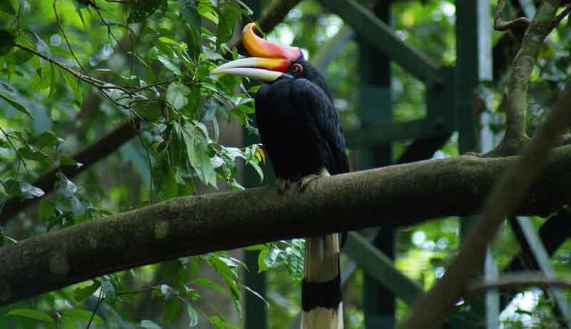 Faktor yang Mempengaruhi Persebaran Flora dan Fauna