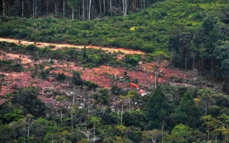 orang hutan kalimantan