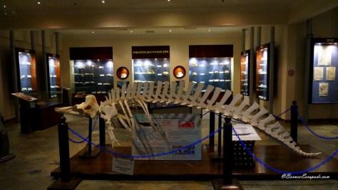 Aquarium & Marine Museum 02