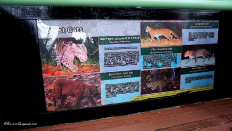 Common mammals that can be found in the forest reserve