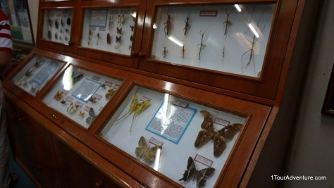 Some exhibits at the Kinabalu Park Gallery