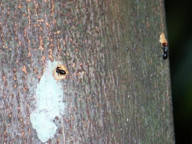 ants-at-holes-3p7a6699