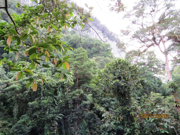 View canopy walkway IMG_4767.JPG