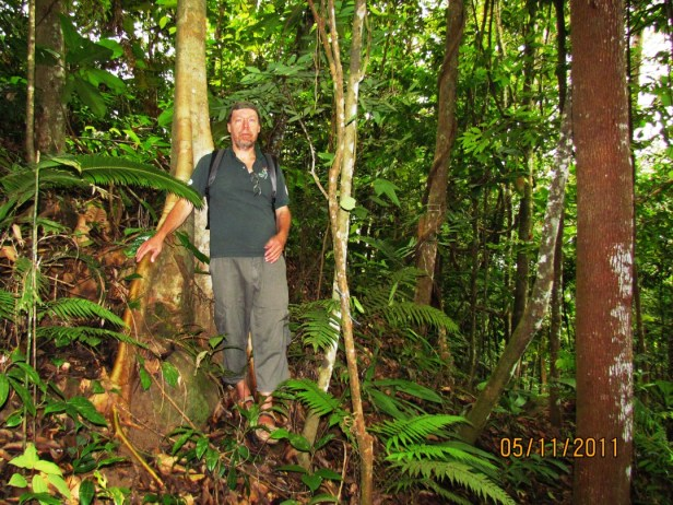 Ficus geocharis IMG_8873 - Copy.JPG