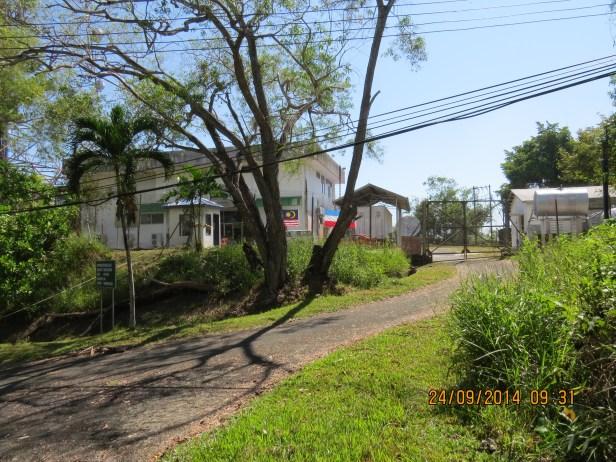Ficus inaequipetiolata  Leila FR 04.JPG