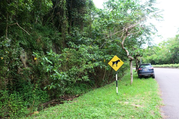 Ficus septica IMG_0229.JPG