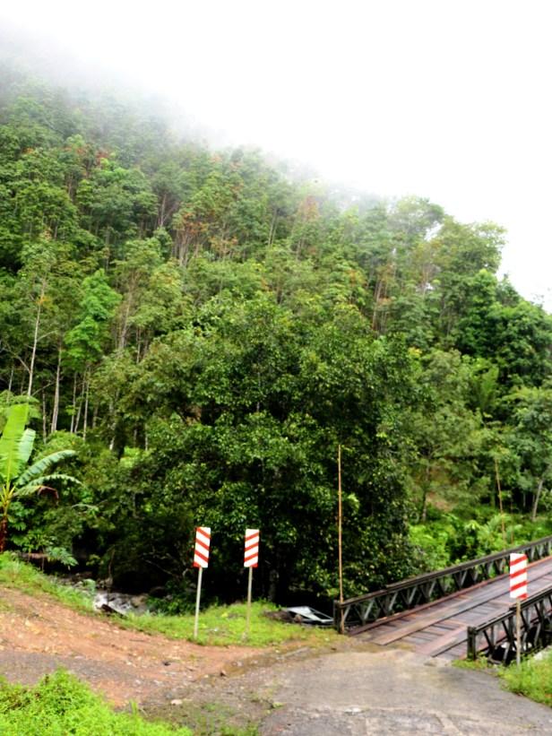 Ficus dubia IMG_0854
