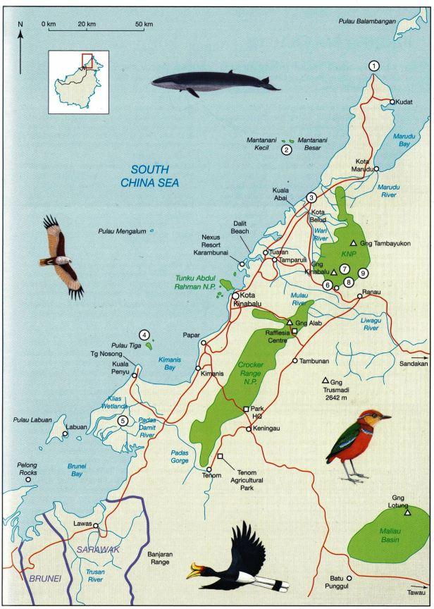 Ficus gul Map NW Borneo