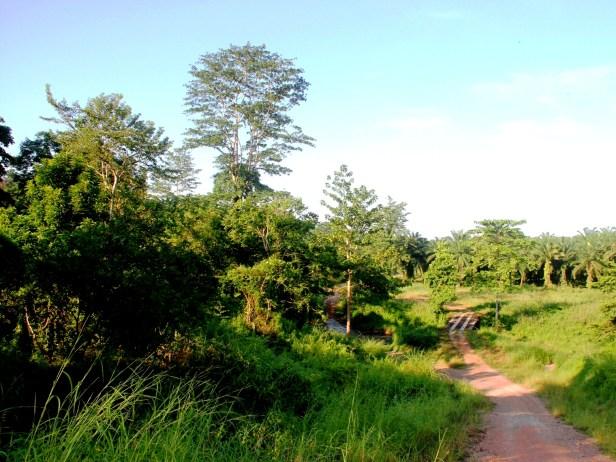 Tabin habitat IMG_5644