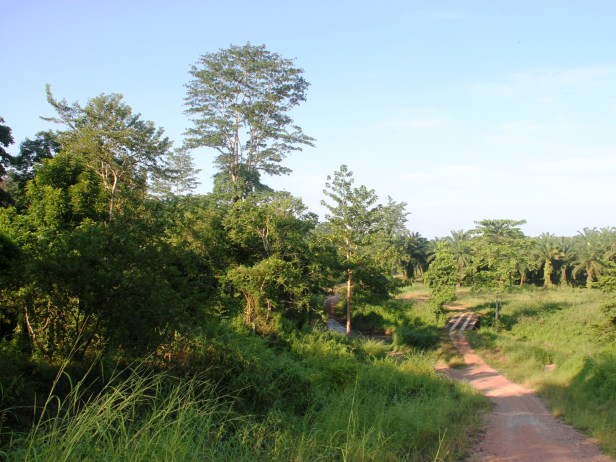 Tabin habitat IMG_5644.jpg