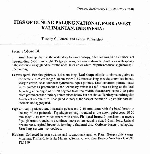 Laman & Weiblen (1998) Ficus globosa