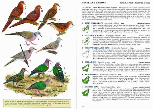 0006 01b Doves Full DPS - Copy.jpg
