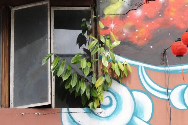 05 Ficus tinctoria var gibbosa 3Y3A0706