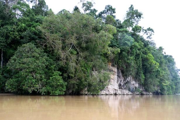 Ficus caulocarpa 3P7A7813