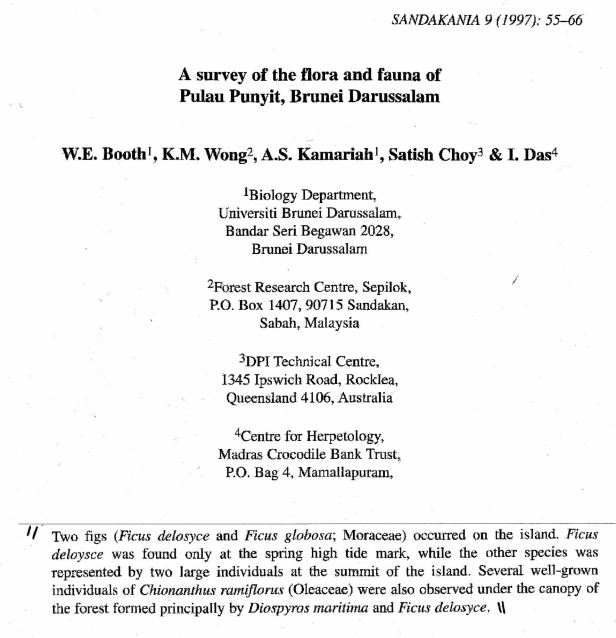 Booth et al (1997) Two figs found on Pulau Punyet.jpg