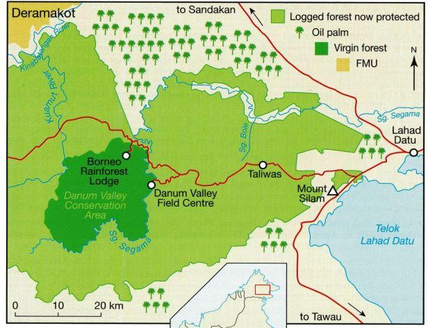 347 Danum  valley BRL.jpg