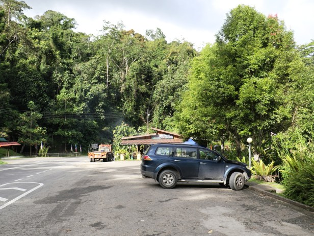 03 Ficus gul Rest stop  opp CRP HQ 3Y3A2638.JPG