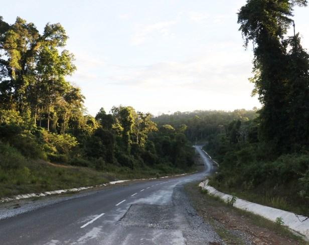 Ficus lawesii Maliau 06 3Y3A2255.JPG