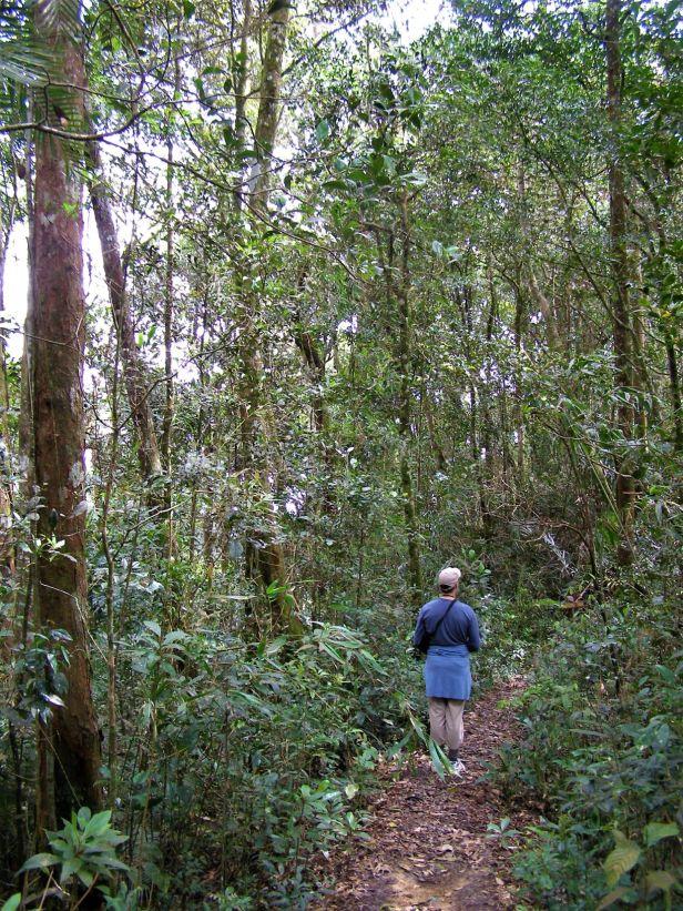 03 Ridgetop montane forest at Kinabalu Park HQ P1070112.JPG