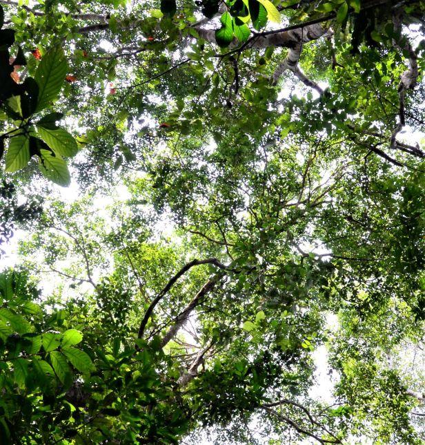 02 Ficus pellucidopunctata Sg. Menanggol●20190472★ Shuai LIAO-LSL_3530.JPG