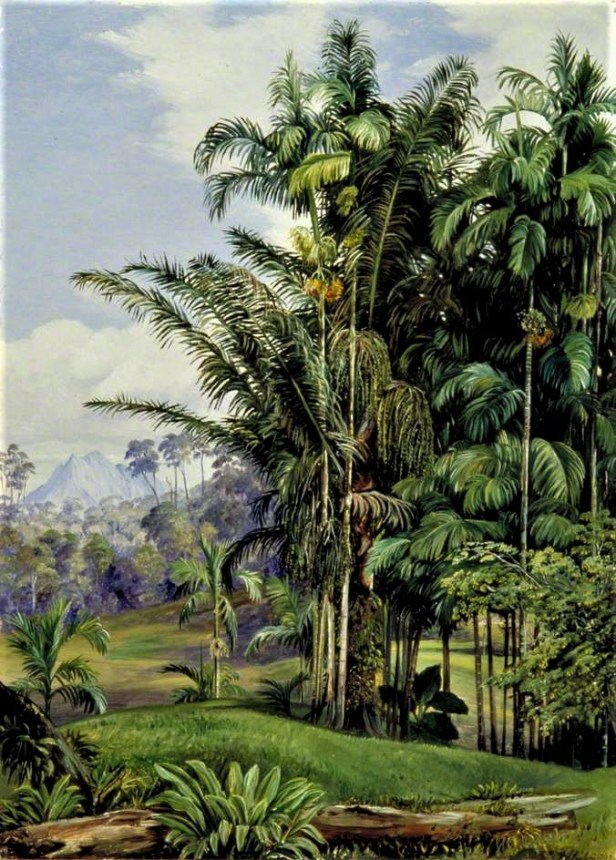 Marianne north Wild Palms and Matang LSW_RBGM_MN_CD6_576-001.jpg