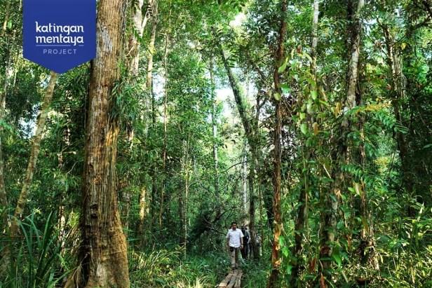 04 Peatswamp forest Katingan Mentaya