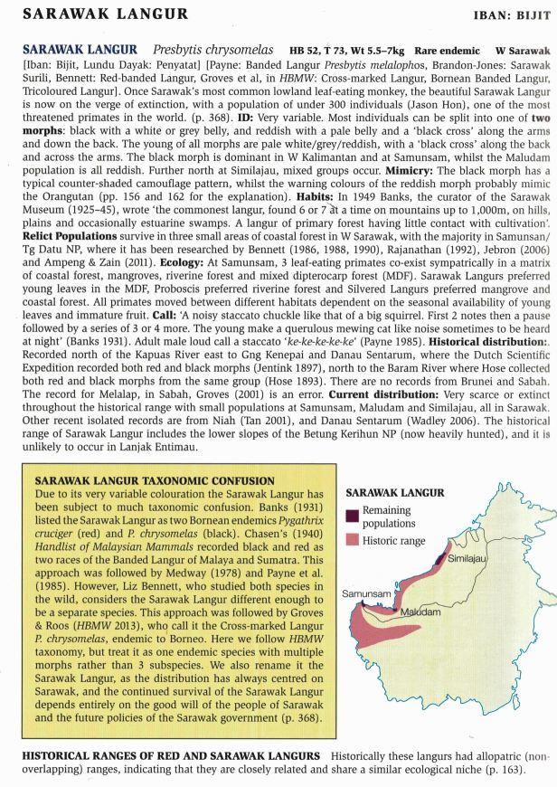 170-171 Sarawak Langurs - for web.jpg