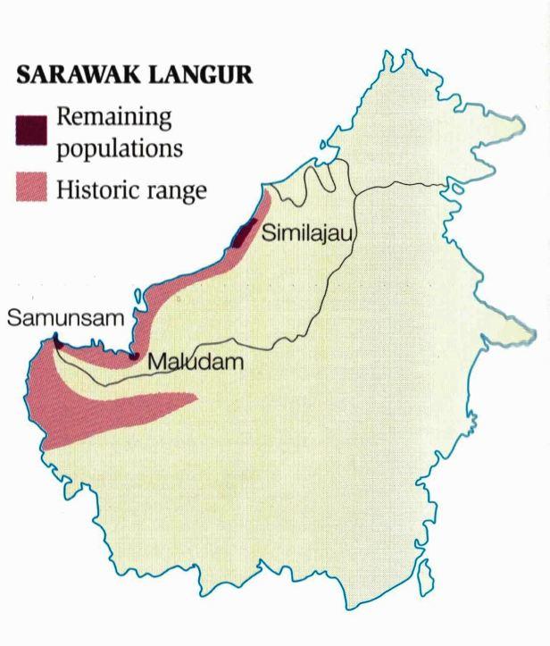 Sarawak Langur map .jpg