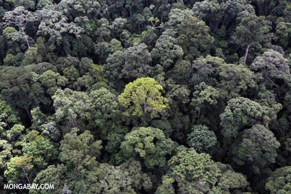 Rainforest in Sabah, Malaysian Borneo. Photo by Rhett A. Butler © Mongabay.com