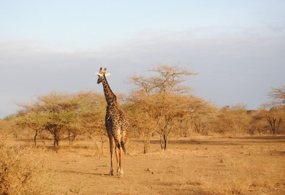 5 reasons everyone needs to go on a safari before they die