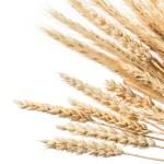 en sundere livsstil, hvede