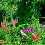 stauder i haven,