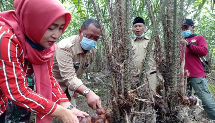 Panen Raya Salak Desa Banyuadem Kecamatan Srumbung (5/1/2020)-(foto: bsn)