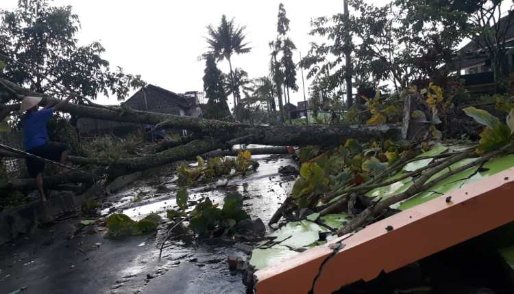 Tembok Sekolah Dasar Ketunggeng Dukun ambrol tertimpa pohon yang tumbang karena bencana angin kencang (2/3/2021)